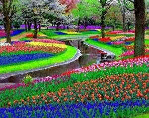 голландия-Holland-парк-цветы-440063