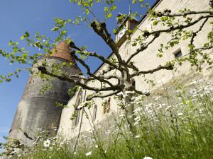 384454_chateau_yverdon
